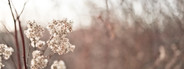 Cottony Winter Flowers