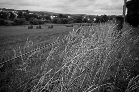 Grass field and fence