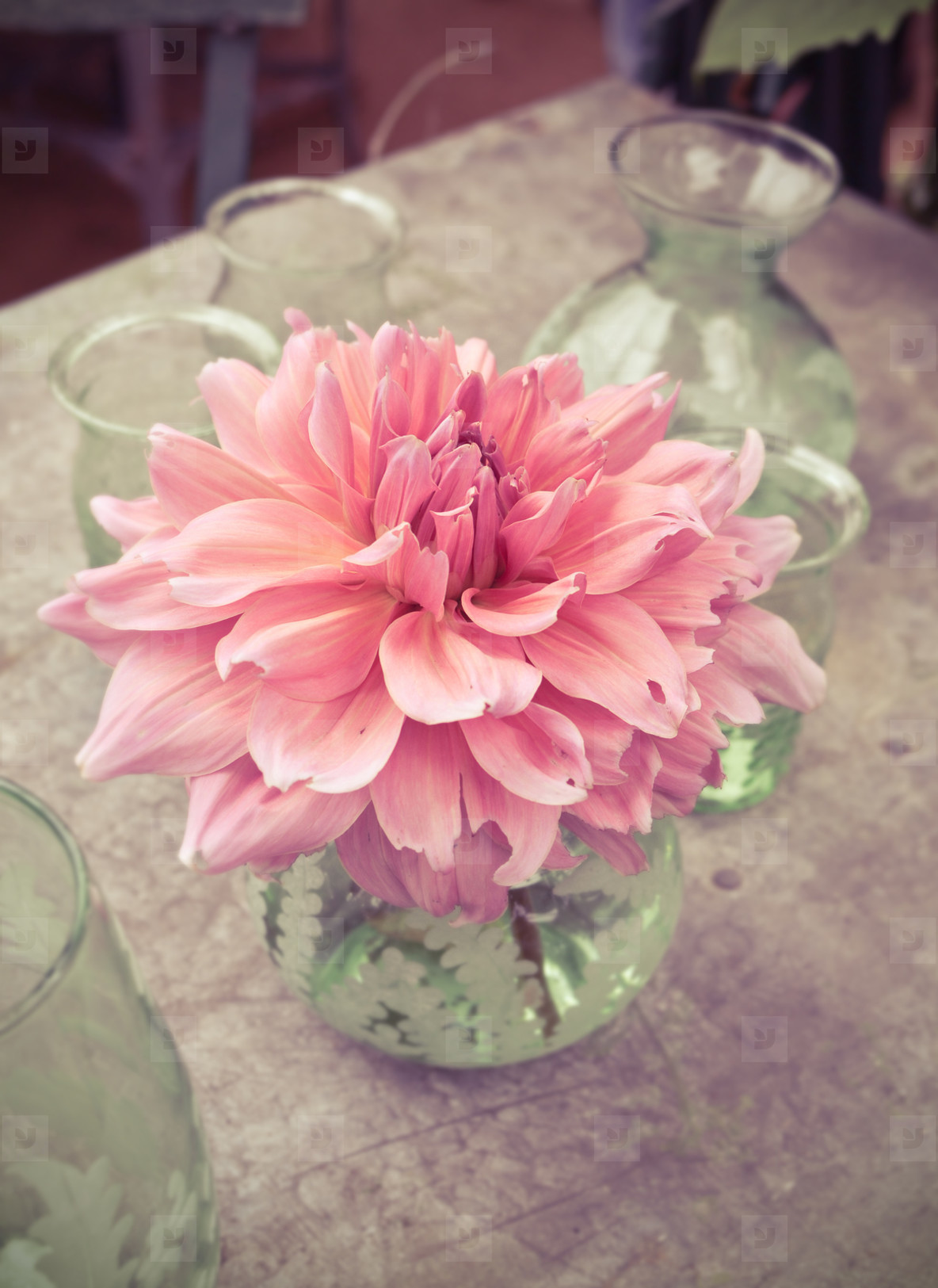dahlia flower in green vase