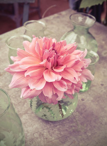 dahlia flower in green vase