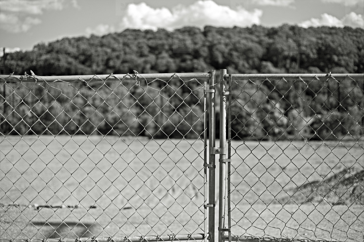 chain link fence and trees