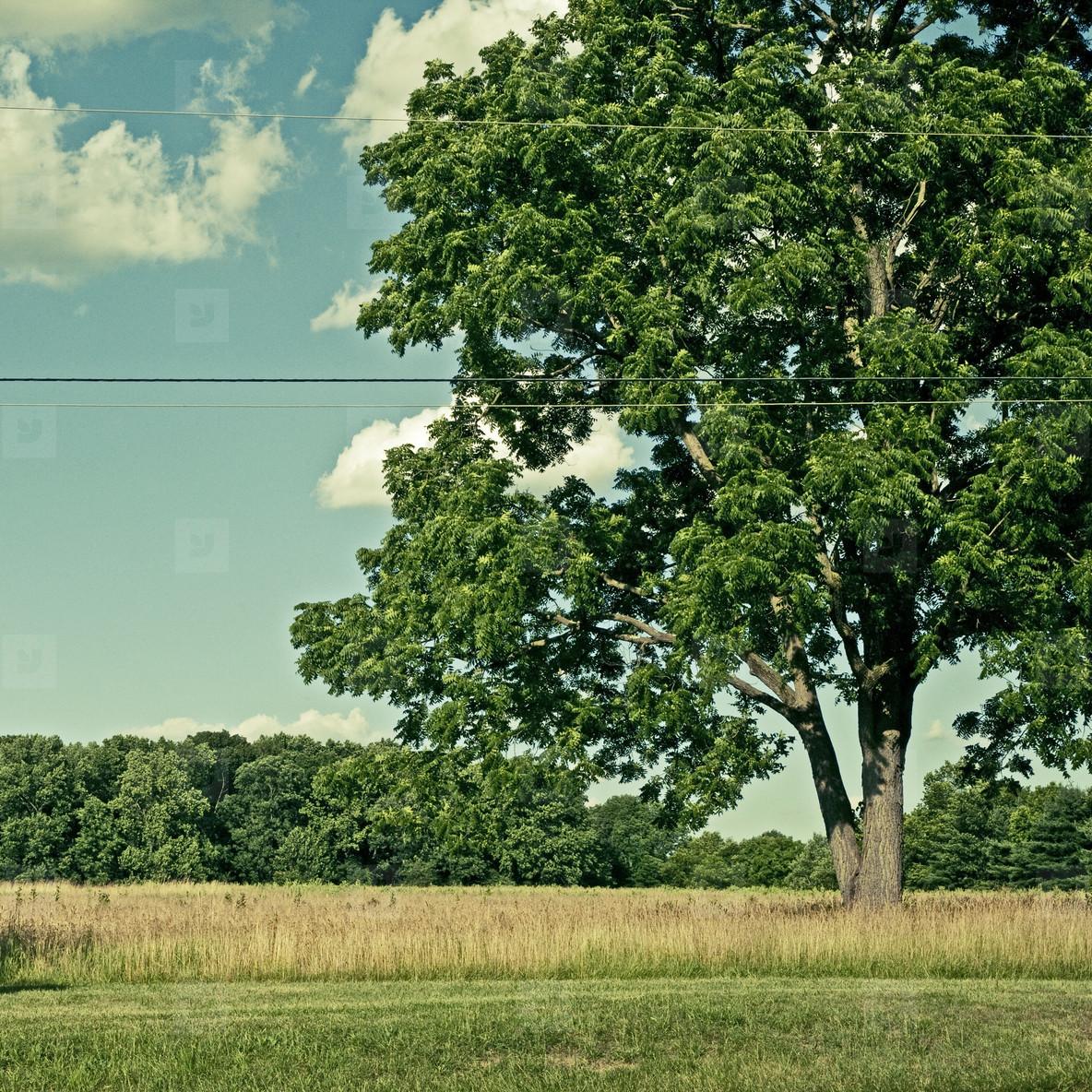 Road  tree  field  sky