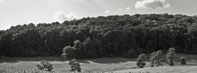 Tree line and grassy field