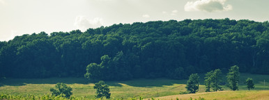 Tree line and grassy field color