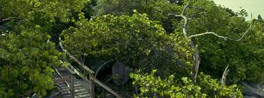 Caribbean beach trail bridge