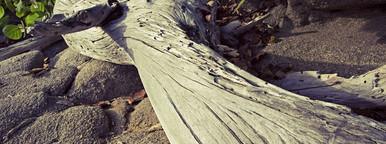 Caribbean driftwood on beach
