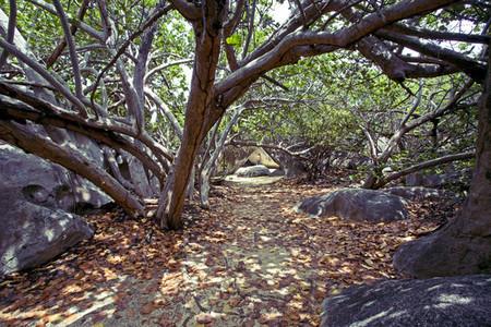Caribbean beach trail
