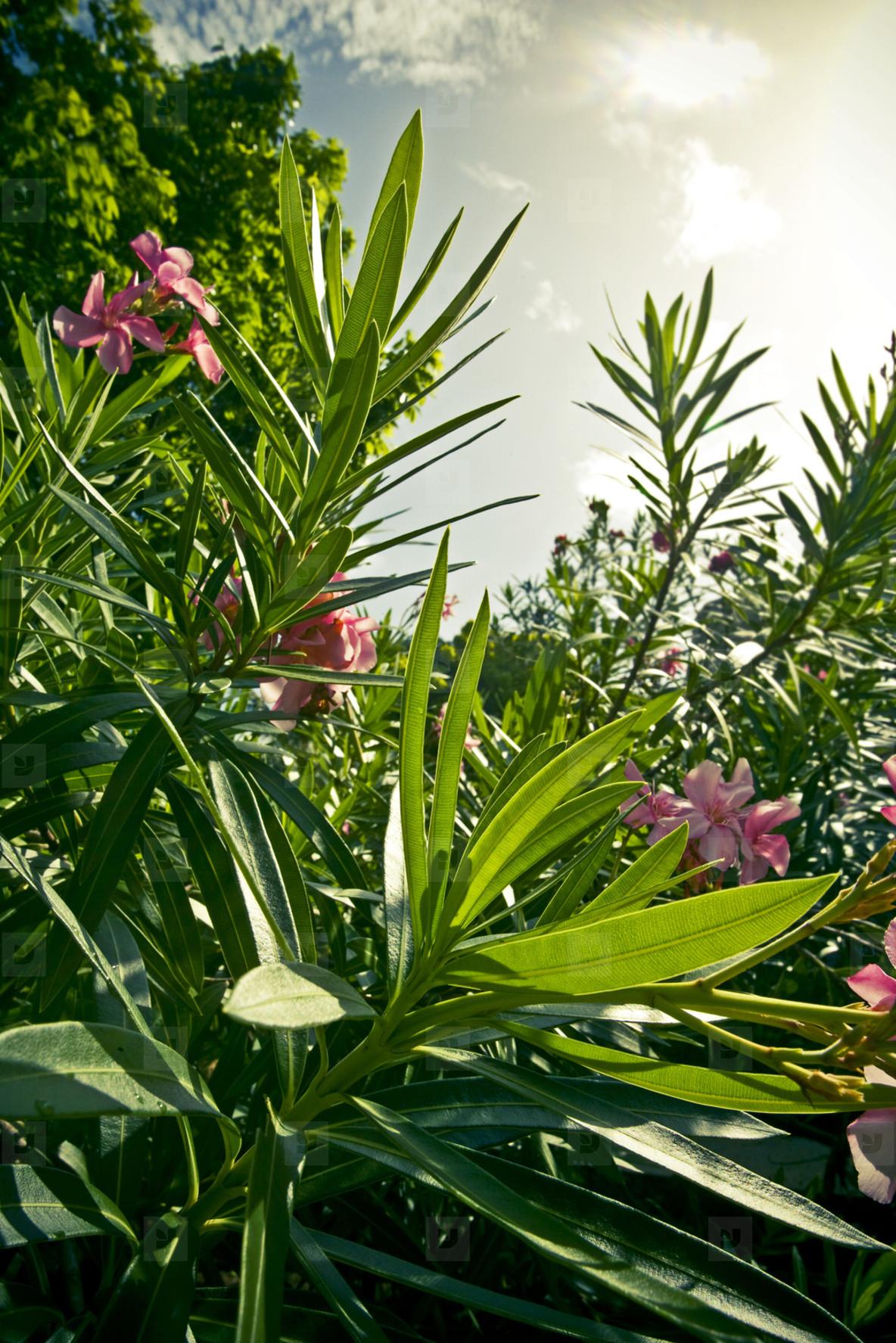 Caribbean island flower