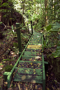 Caribbean forest bridge
