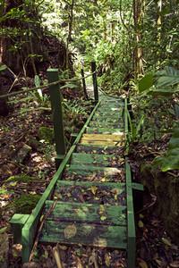 Caribbean forest bridge