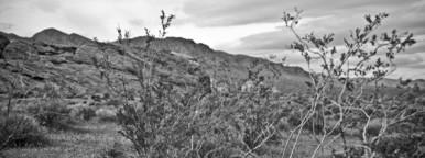 Desert plant life and rocks