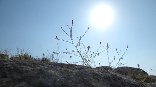 Sunny mediterranean landscape