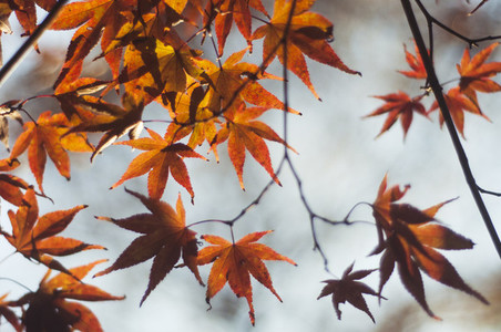 Fall Leaves 1