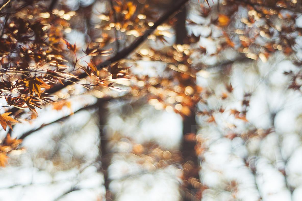 Fall Leaves 3