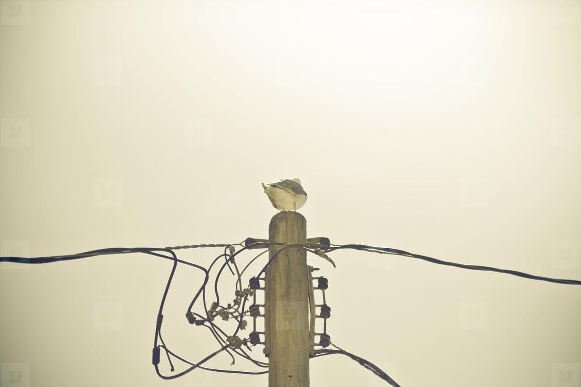 Birds   Wire