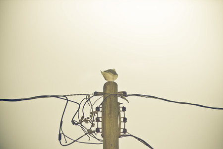 Birds amp  Wire