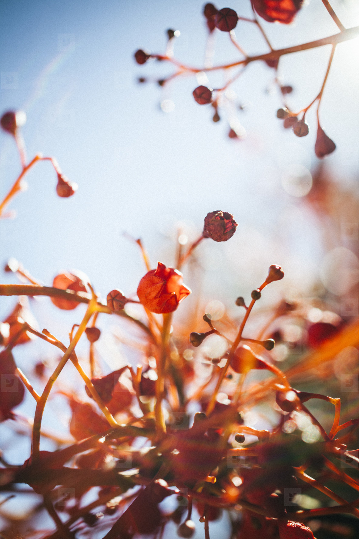 Close up of red plant leaves and