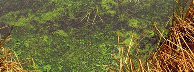 Marshy swamp