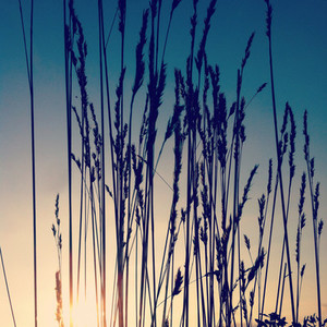 Morning grasses