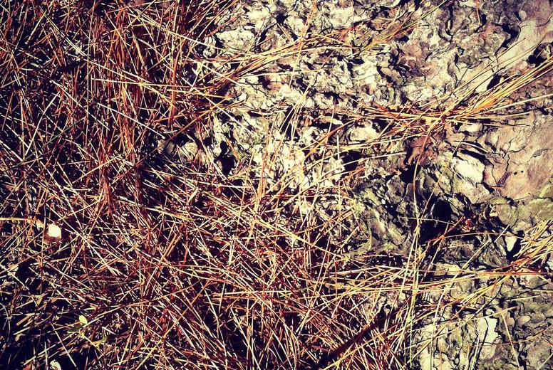 Nature s floor