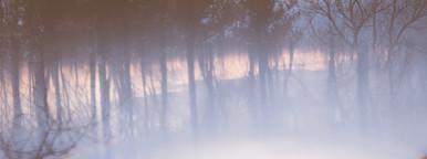Tree Horizon  2