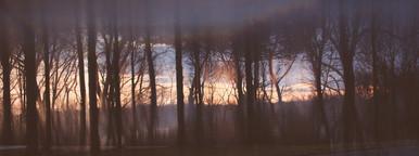 Tree Horizon  3