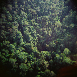 Lush Trees in Asian Rain Forest