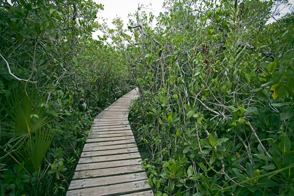 Tropical walking trail