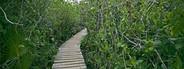 Tropical walking trail