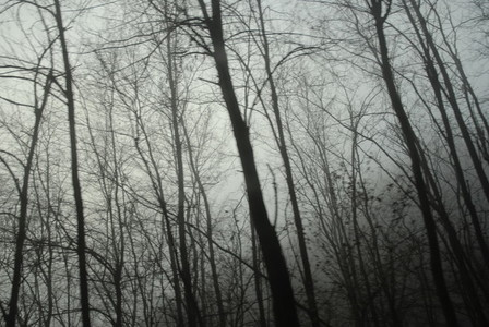 Melancholy Forst