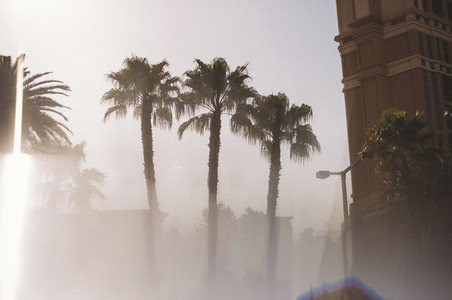 Tres Palms