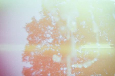 Tree Lightleaks