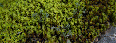 green moss
