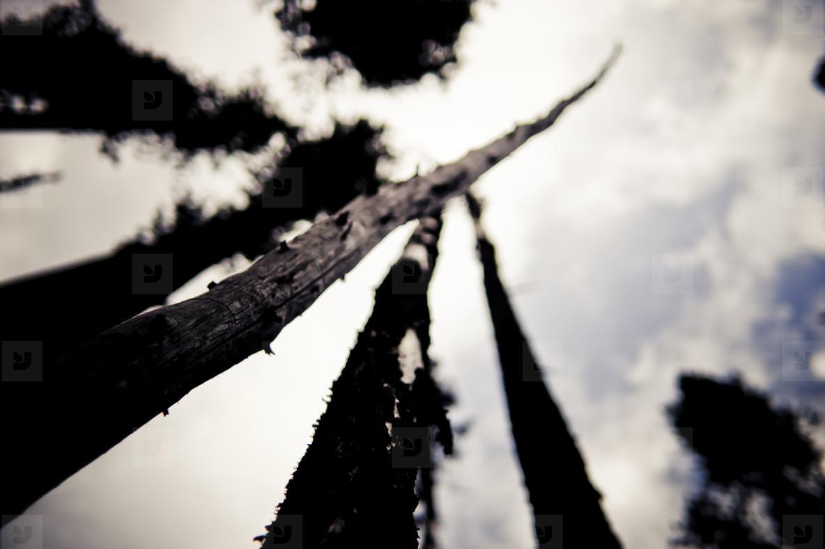 Sick Tree