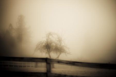 Fog Atmosphere