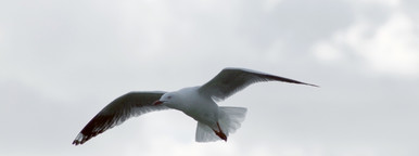 Flying Seagull 02