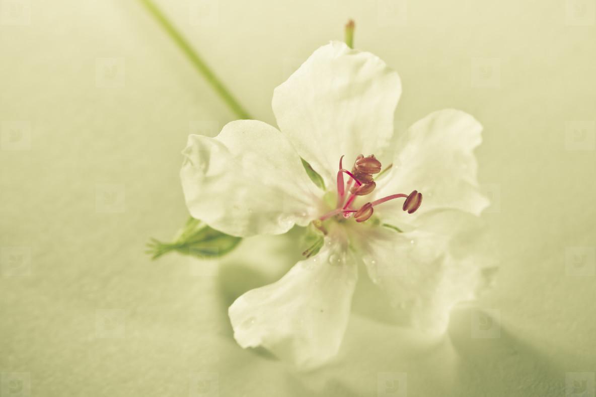 Botanicals Vintage 03