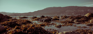 Rocky Seaweed Shore