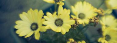 Botanical Images
