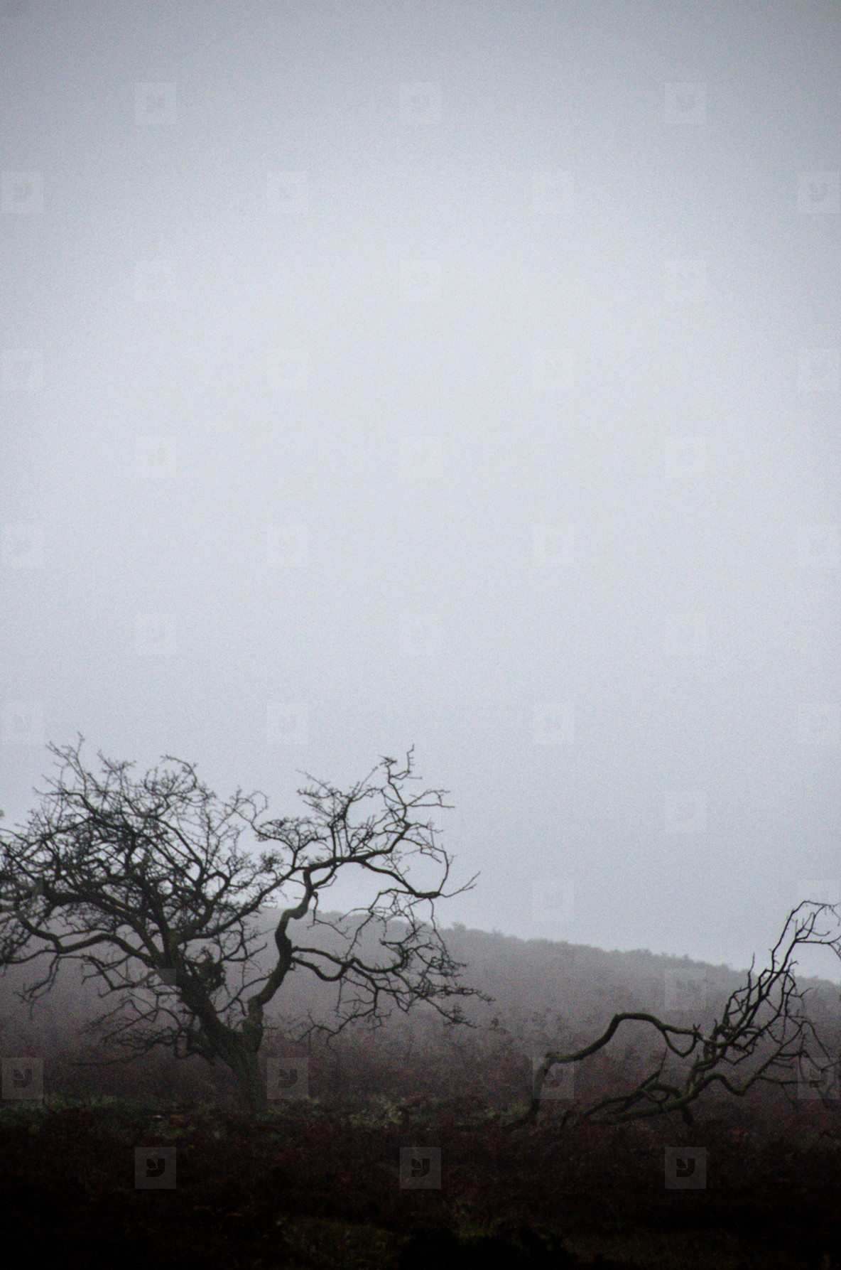 Wiry Trees