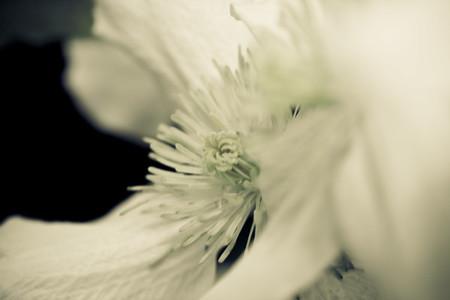 Botanical Images 02