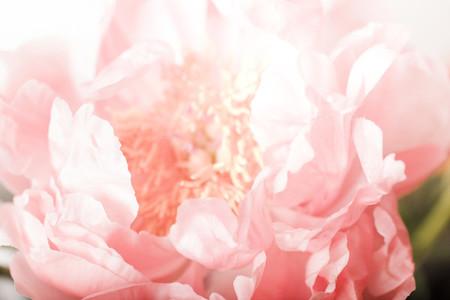 Botanicals 04