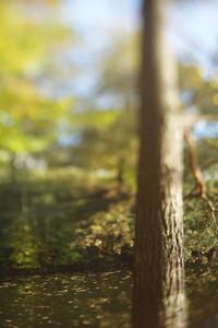TS Tree