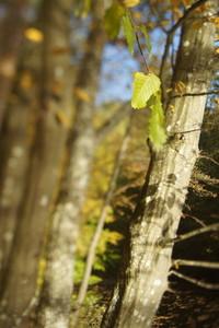 TS Tree 2