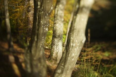 TS Tree 3