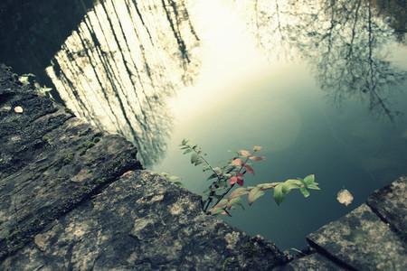 dark pond