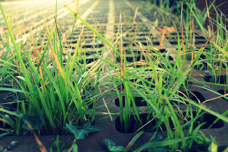 grass growing
