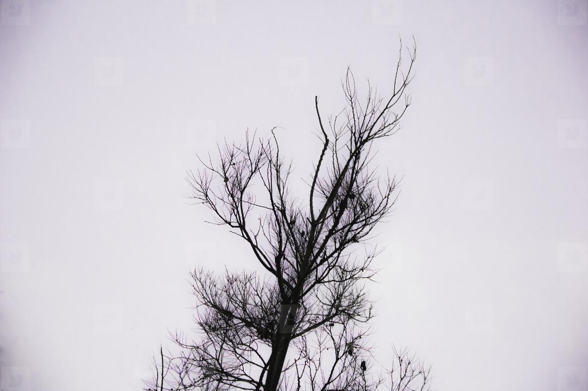 A Sad Tree