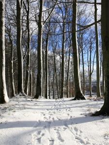 First Snow5