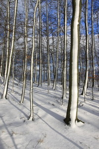 First Snow4